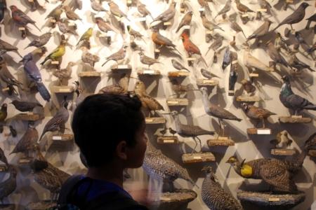 Ochsner bird collection at Tripp Museum in Prairie du Sac