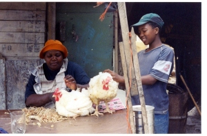 Chickens in Nyanga