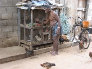 Man with chickens in India